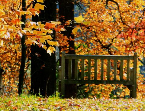 Image of bench in fall foliage.